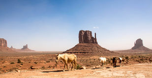 Mustangs at Monument Valley Stock Photo