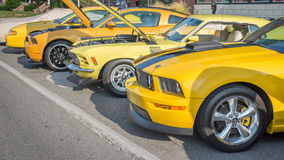 Mustangs, Mustang Alley, Woodward Dream Cruise Royalty Free Stock Photos