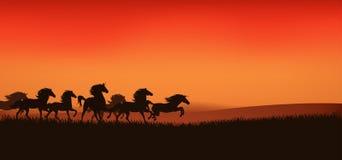 Mustangs vector. Herd of running wild horses  - sunset prairie landscape Stock Images