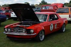 Mustangtrans. f.m. Fotografering för Bildbyråer