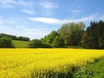 Mustard farm in Luxembourg, Europe. Mustard farm in Luxembourg,  Europe royalty free stock photo