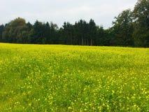 Mustard farm in Luxembourg, Europe. Mustard farm in Luxembourg,  Europe stock photography