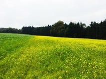 Mustard farm in Luxembourg, Europe. Mustard farm in Luxembourg,  Europe royalty free stock photography