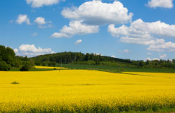 Mustard Field in Bloom Landscape. A photo of a mustard field in bloom with a sky, clouds, and forest background. This landscape photo was taken in the Bavarian Stock Photography