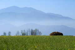 Mustard field and hills Stock Photography
