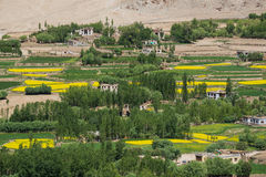 Mustard field in Leh Ladakh,India. Chemrey Monastery or Chemrey Gompa is a 1664 Buddhist monastery, approximately 40 kilometres (25 mi) east of Leh, Ladakh Stock Images