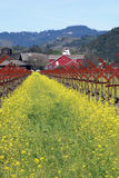 Mustard Field and Old Red Barn royalty free stock images