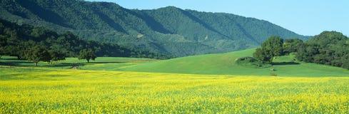 Mustard Fields. Sunrise, Mustard Fields, Upper Ojai, California Stock Photo