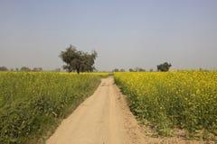 Mustard fields in abohar Royalty Free Stock Image
