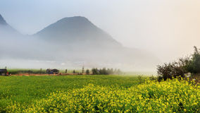 Mustard fields Royalty Free Stock Image