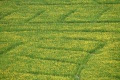 Mustard flower field Stock Photography