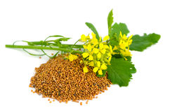 Mustard Flowers And Seed. Royalty Free Stock Photos