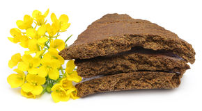 Mustard flowers and cake Royalty Free Stock Images