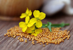 Mustard flowers with mushroom Stock Image