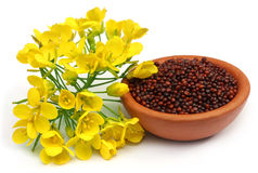 Mustard flowers and oil Royalty Free Stock Photography