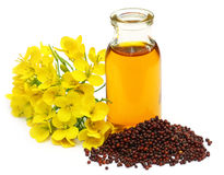 Mustard flowers and oil Royalty Free Stock Photo