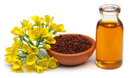Mustard flowers, seeds and oil Royalty Free Stock Image