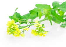 Mustard flowers Royalty Free Stock Images