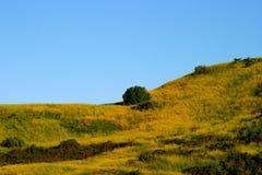 Mustard Grass Royalty Free Stock Photos