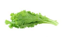 Mustard Green Stock Image