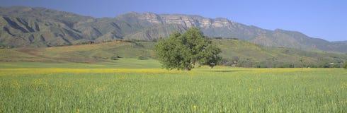 Mustard in green field Royalty Free Stock Photo