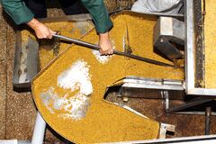 Free Mustard Powder Factory Making Mustard Mass From Mustard Seeds. Innovative Equipment For The Industrial Production Of Royalty Free Stock Photo - 181057945