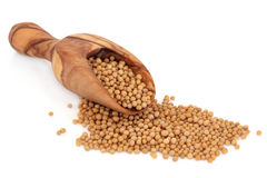 Mustard Seed Stock Photography