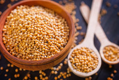 Mustard seed Stock Images