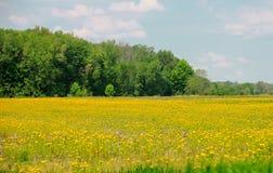 Mustard seed farm in Northder Ohio royalty free stock photos