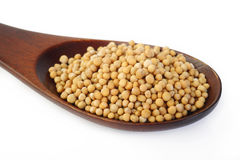 Mustard seed in wooden spoon Royalty Free Stock Photos