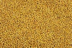 Mustard Seed Yellow Stock Photography