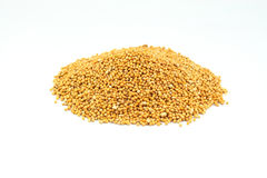 Mustard seeds. Stock Image