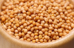 Mustard seeds Royalty Free Stock Images