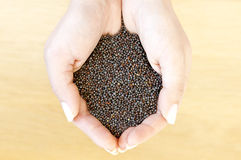 Mustard seeds Royalty Free Stock Image