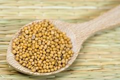 Mustard seeds. On a wooden spoon Stock Photography