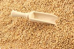 Mustard seeds Stock Photo