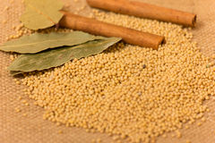 Mustard Seeds Stock Image