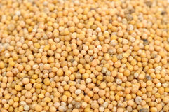 Mustard Seeds Close-Up Royalty Free Stock Images