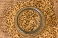 Mustard Seeds in a jar Stock Image