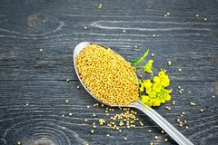 Mustard seeds in metal spoon with flower on black board Royalty Free Stock Images