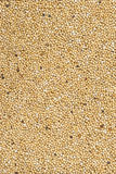 Mustard seeds occupying the entire image Royalty Free Stock Images