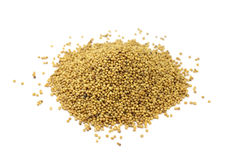 Mustard seeds scattered Royalty Free Stock Photos
