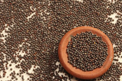 Mustard seeds are the small seeds from Europe Stock Photos