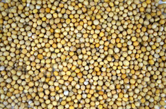 Mustard seeds Royalty Free Stock Photos