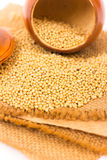 Mustard Seeds Stock Photos