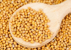 Mustard seeds in wooden spoon Stock Photos