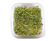 Mustard sprouts salad Stock Photo