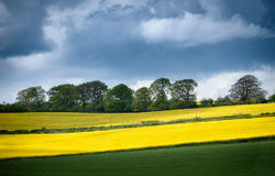 Mustards fields Pattern England Royalty Free Stock Photography