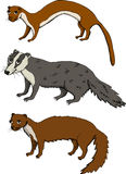 Mustelids. Set of Mustelids - Weasel, Badger, Marten Royalty Free Stock Photography