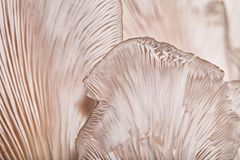 Muster auf einem Pilz Stockbilder